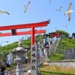 蕪島(かぶしま)神社でウミネコが見れる時期は?場所や行き方やお守りも!