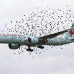 バードストライクの確率や原因は?墜落事故についても!(JAL機エンジン出火)