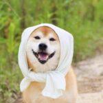 犬の散歩を車で行った岡山の老人(高齢者)は誰?画像や名前を調査!